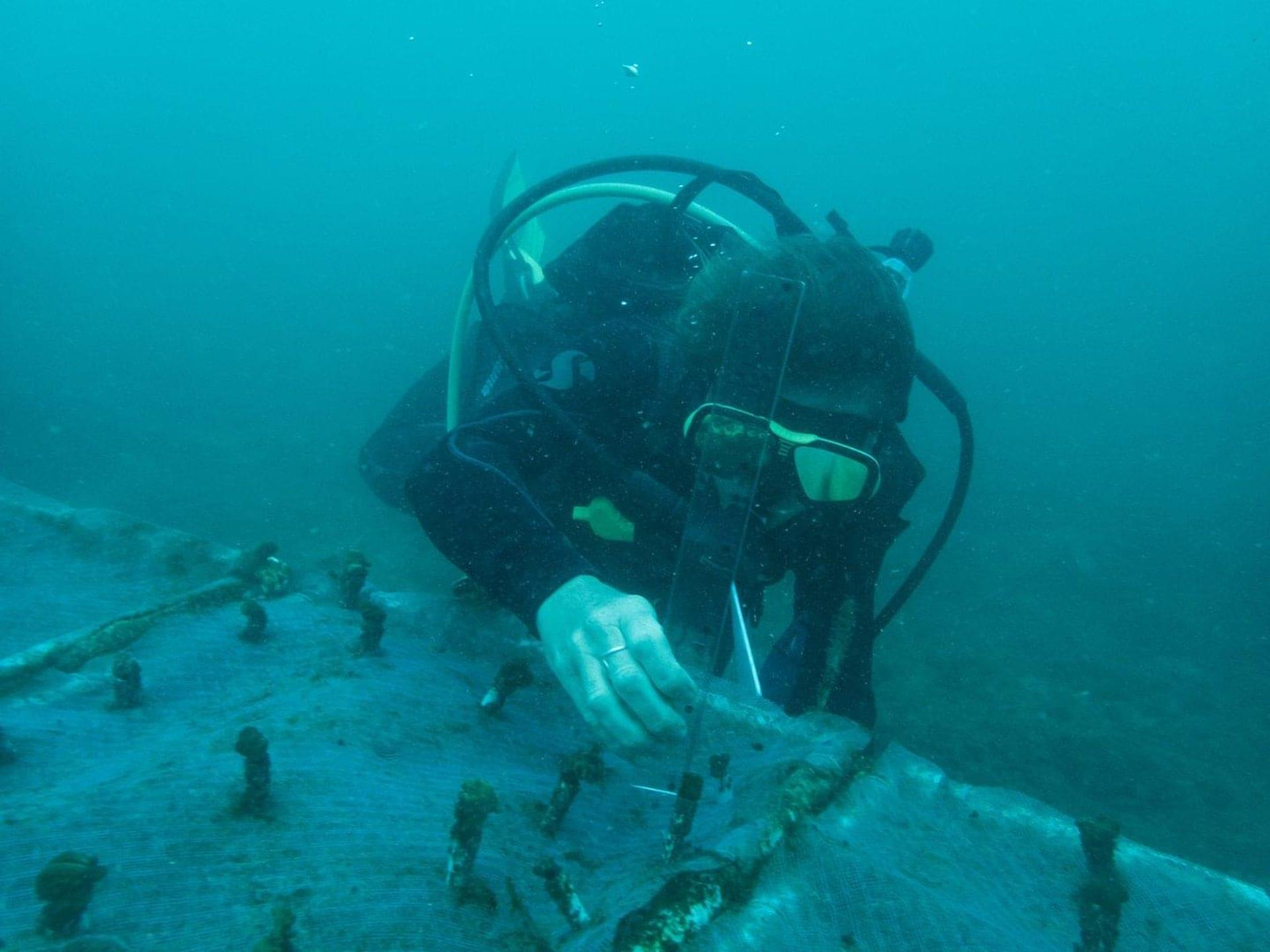 Placing coral fragments in the nursery