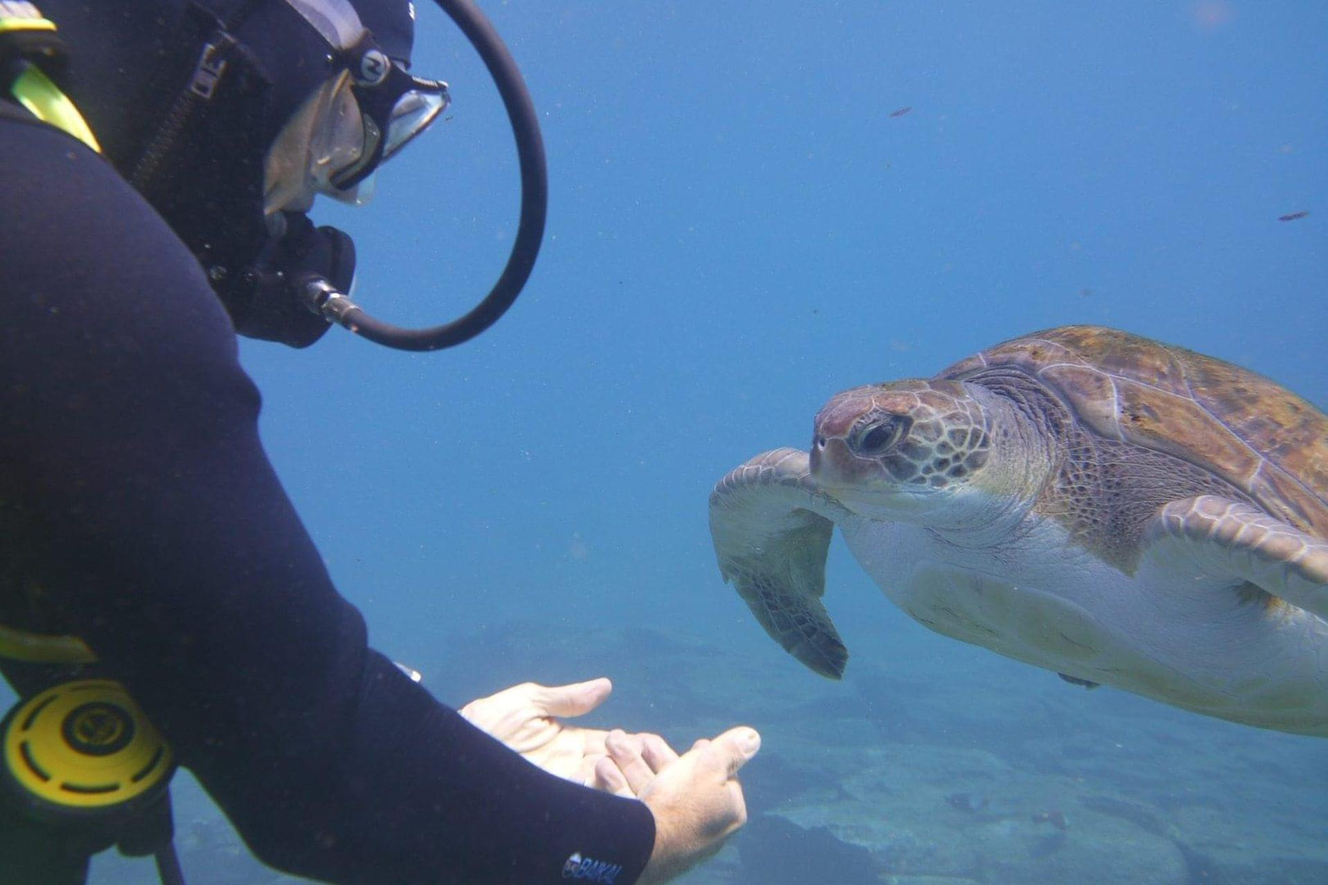 Dive with turtles in Abades
