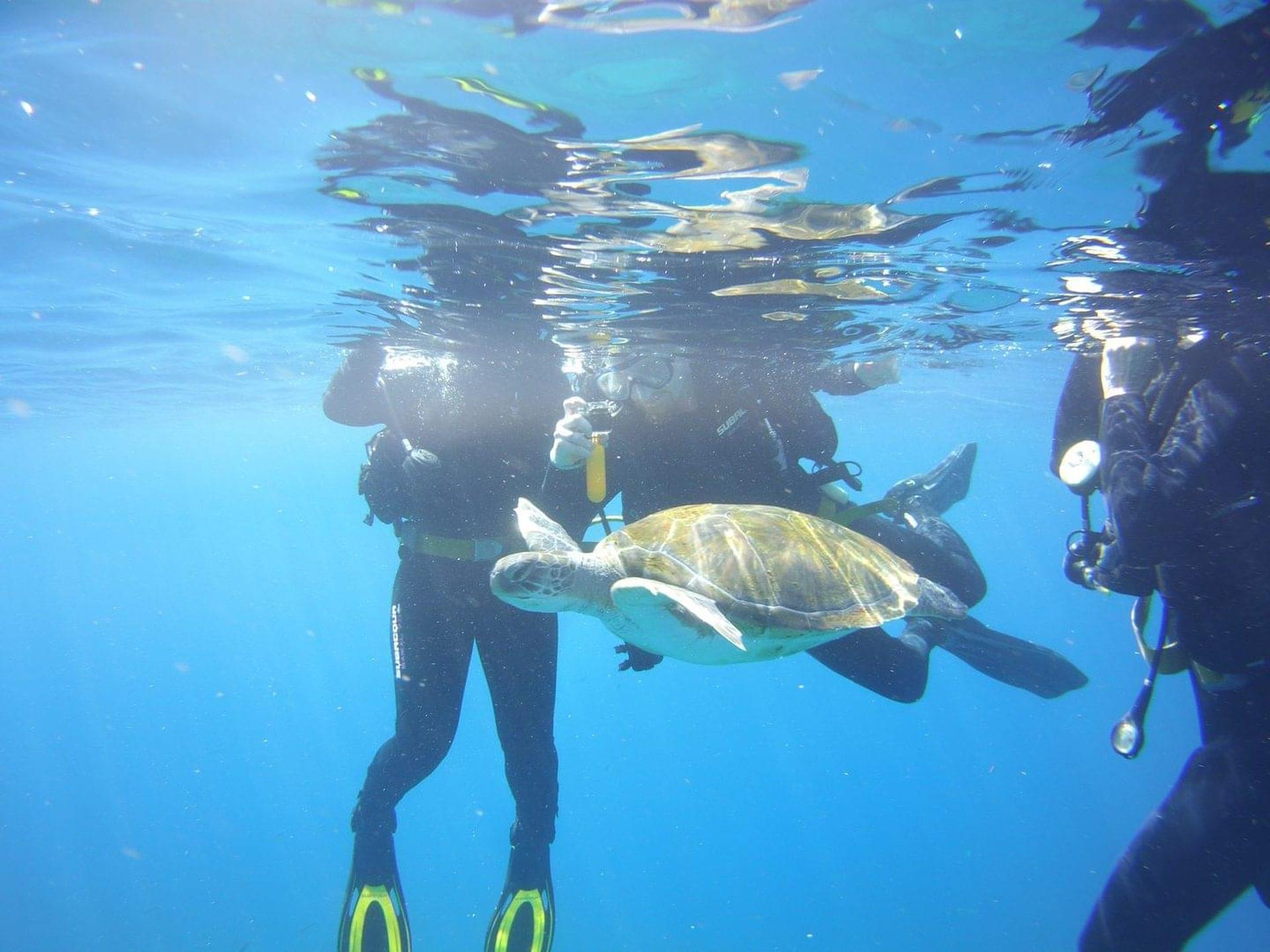 Dive with turtles in Palmar