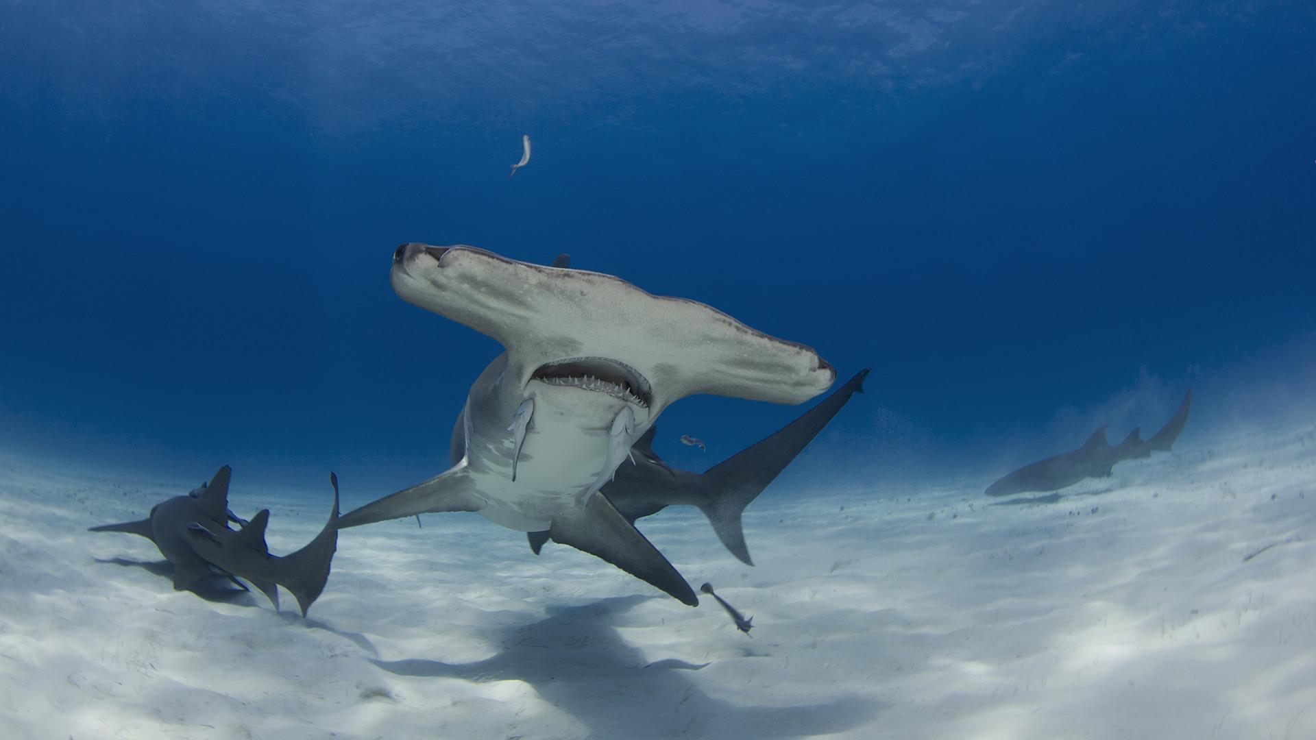 diving in bimini padi travel