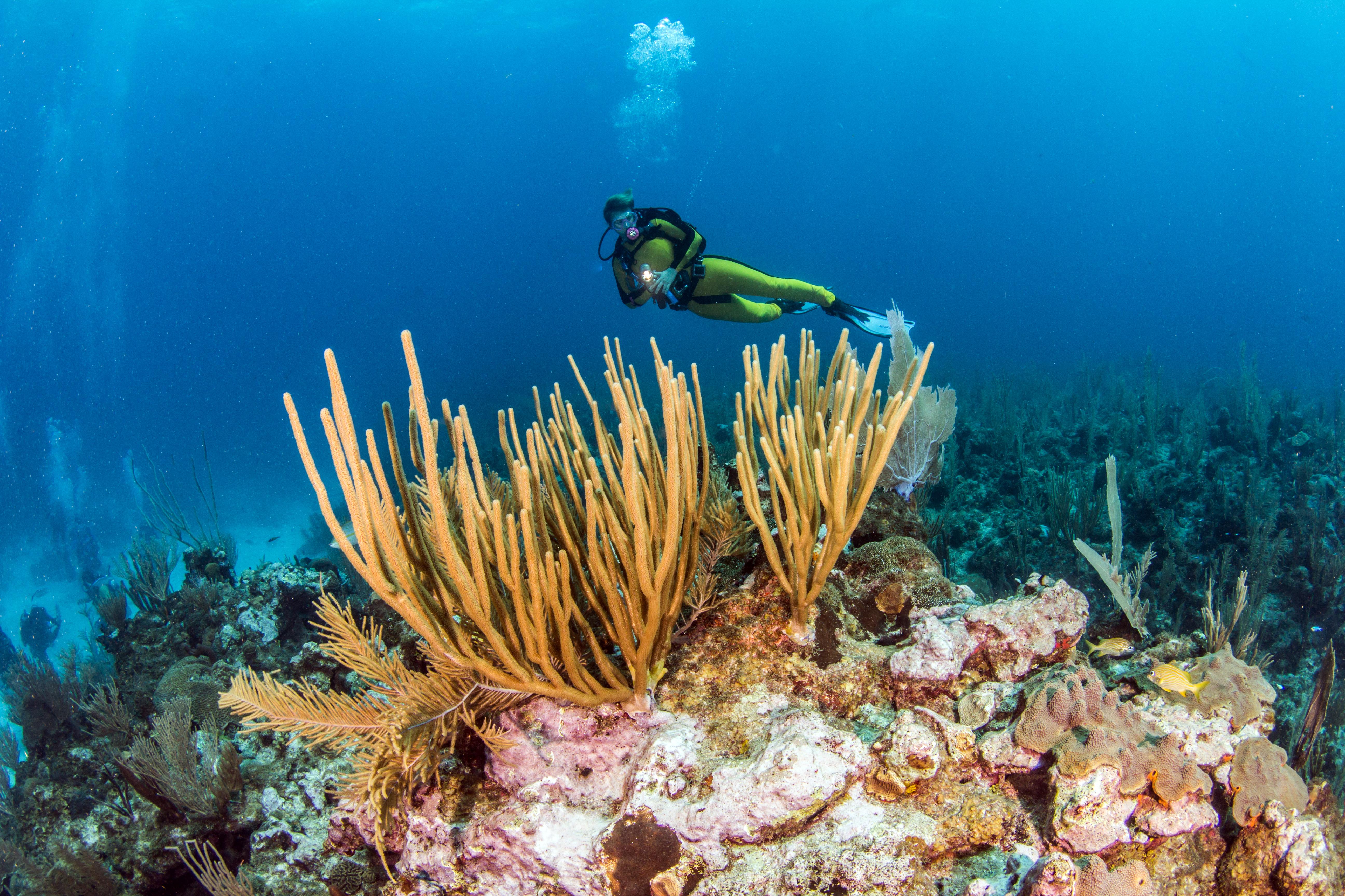 Belize sito di incontri