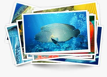 fish-card